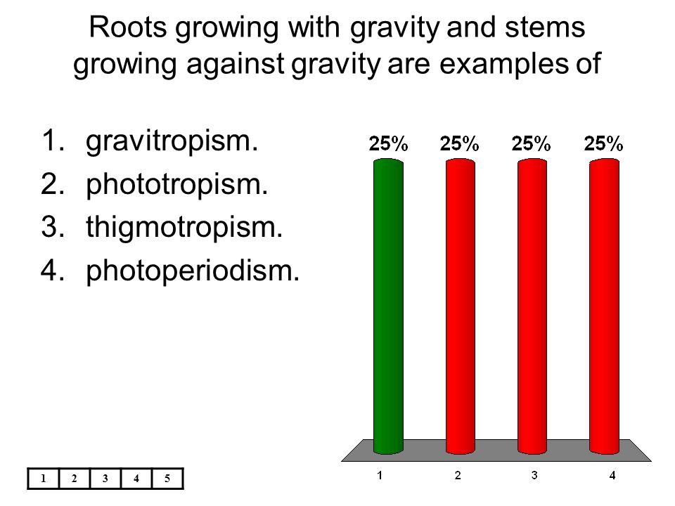 Plants That Are Thousands Of Years Old Have Ppt Video Online Download