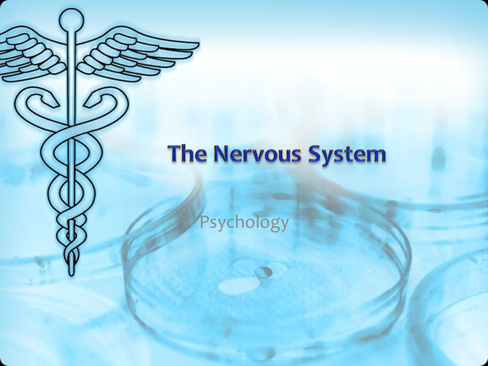 The Nervous System Psychology
