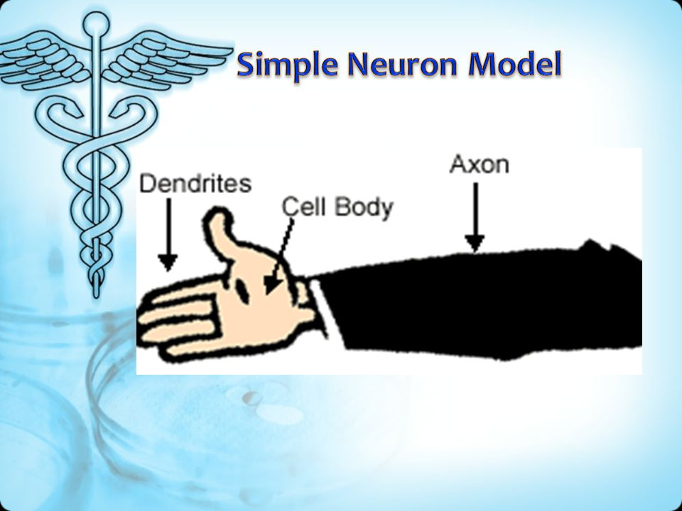 Simple Neuron Model