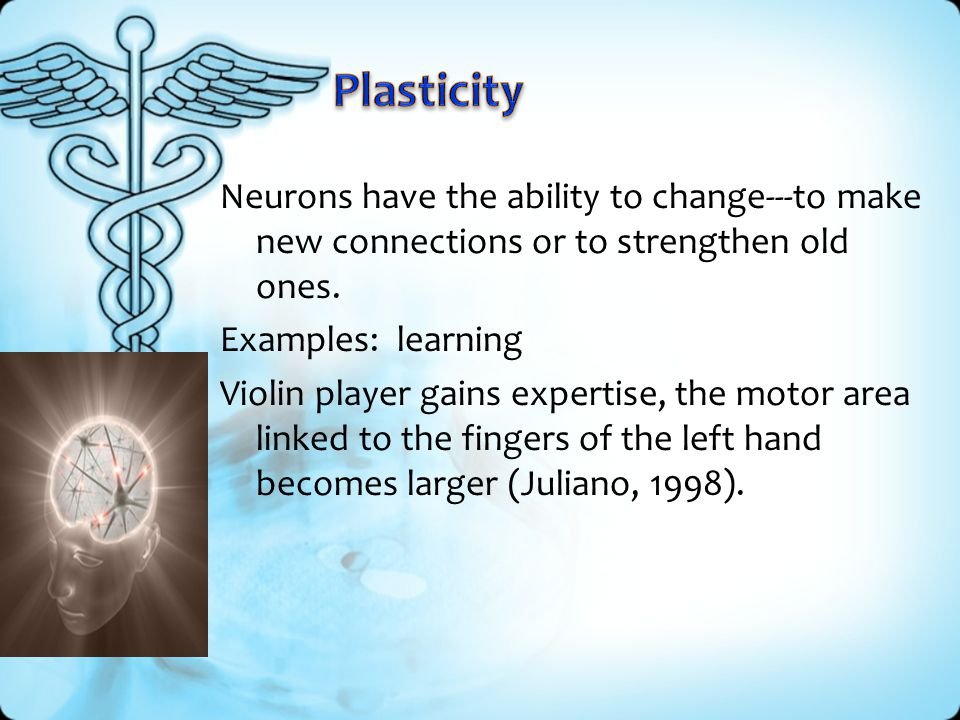 Plasticity Neurons have the ability to change---to make new connections or to strengthen old ones. Examples: learning.