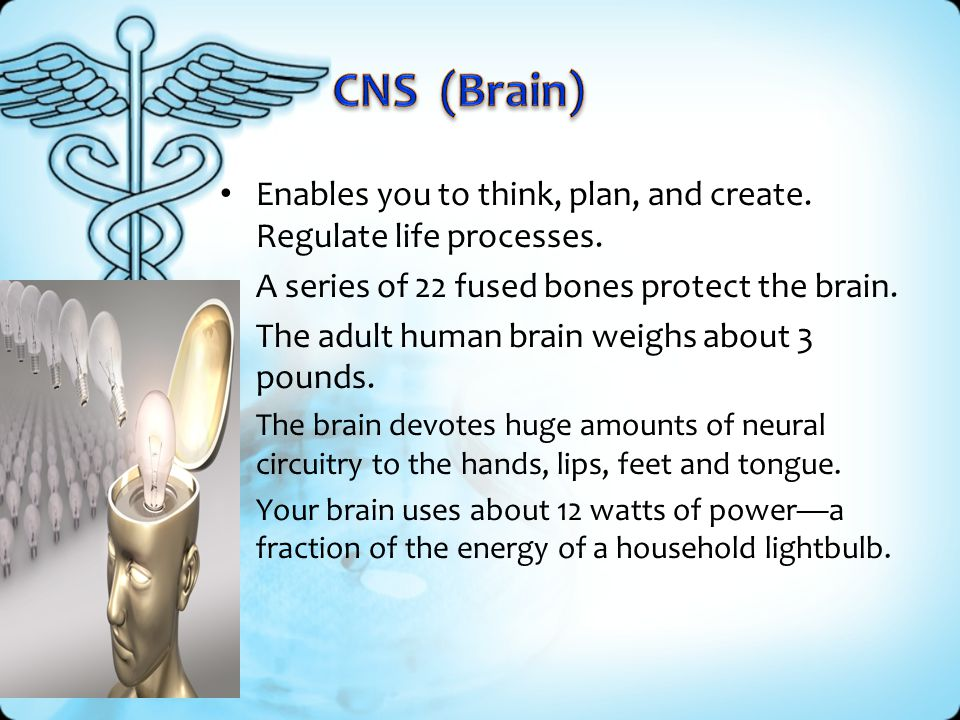 CNS (Brain) Enables you to think, plan, and create. Regulate life processes. A series of 22 fused bones protect the brain.