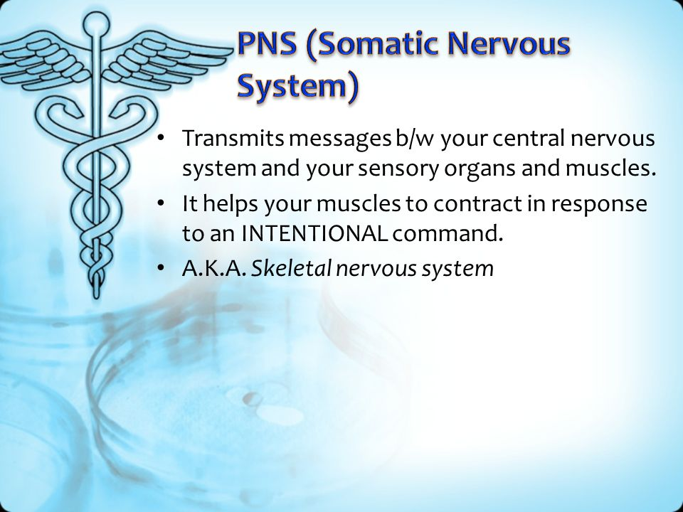 PNS (Somatic Nervous System)