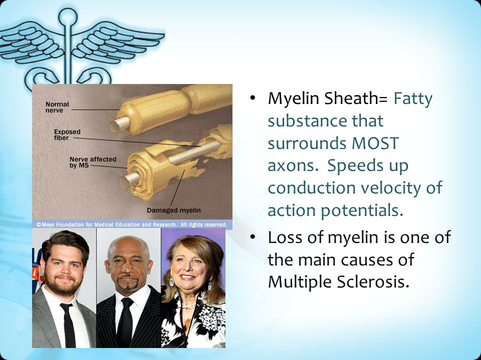 Myelin Sheath= Fatty substance that surrounds MOST axons