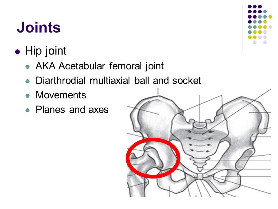 The Hip Joint and Pelvic Girdle - ppt video online download