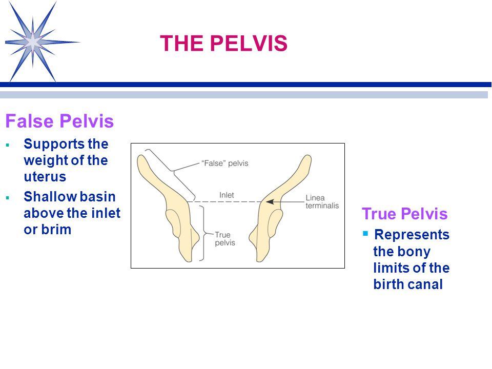 distinguish between the true pelvis and the false pelvis
