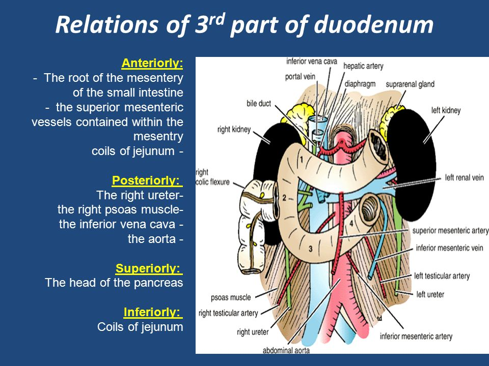 Relations of 3rd part of duodenum