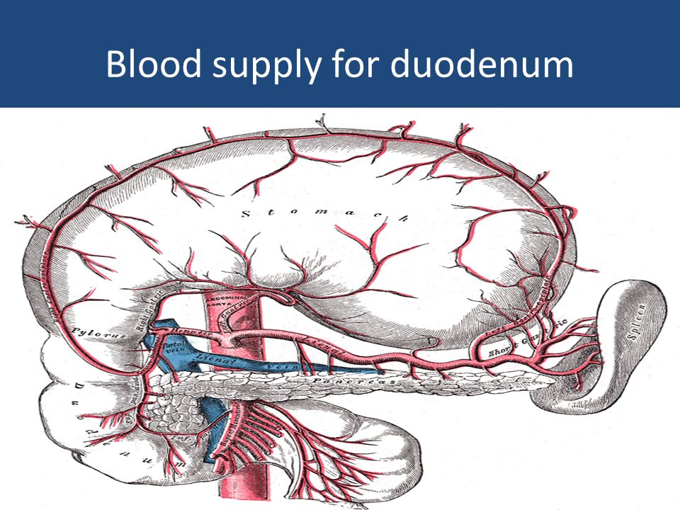 Blood supply for duodenum
