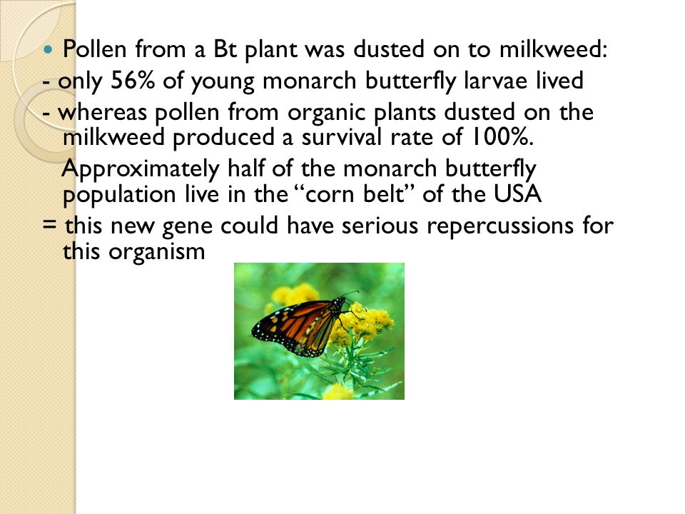 Pollen from a Bt plant was dusted on to milkweed: