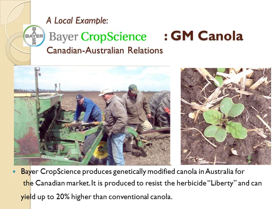 A Local Example: : GM Canola Canadian-Australian Relations