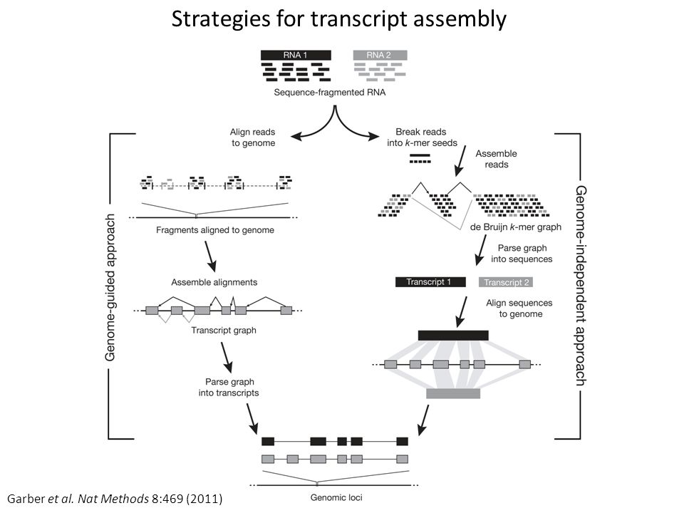 Strategies for transcript assembly