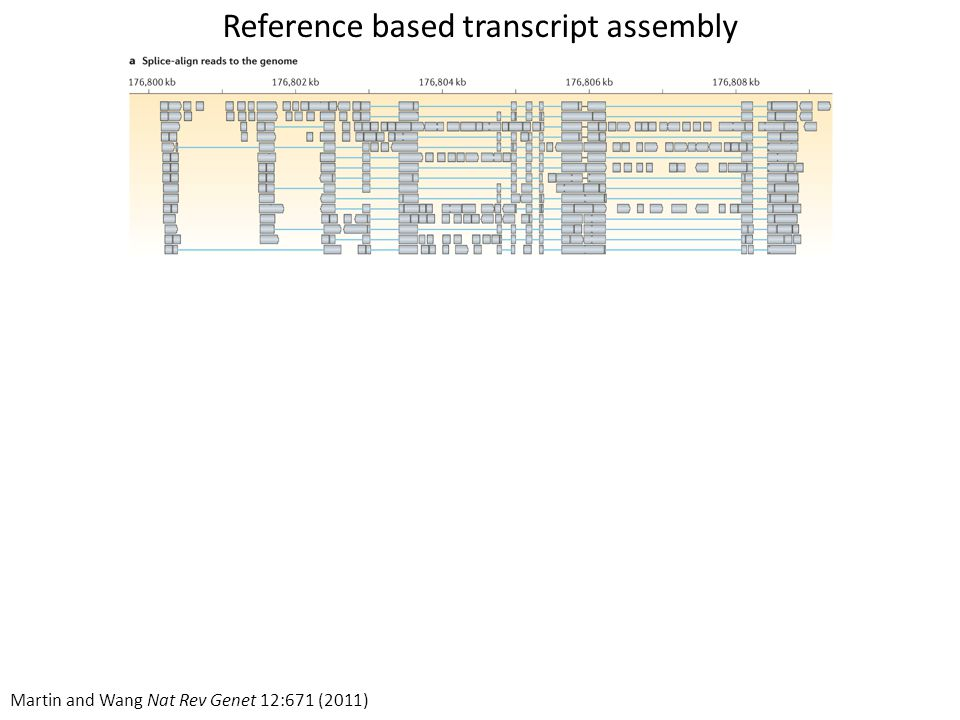 Reference based transcript assembly