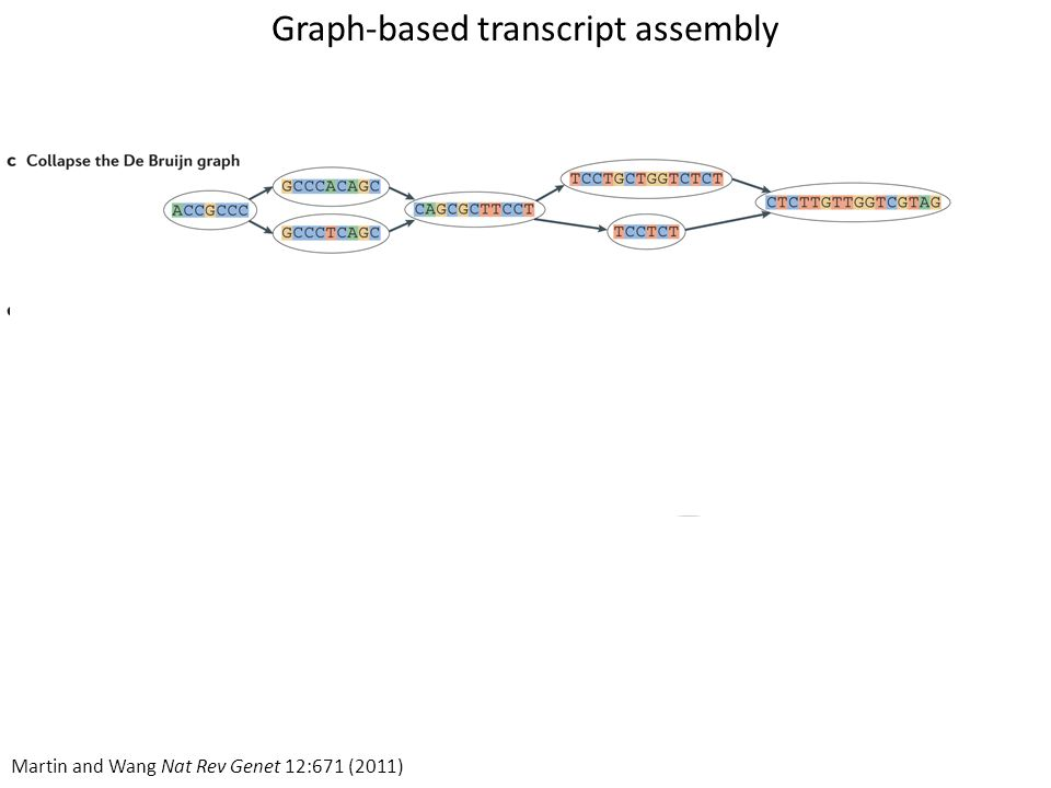 Graph-based transcript assembly