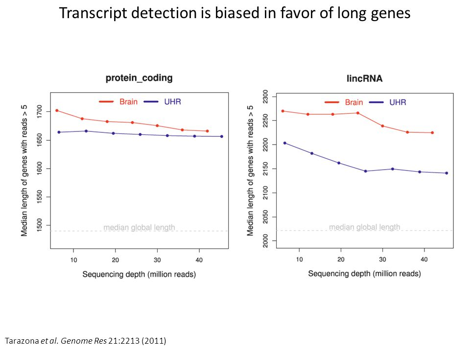 Transcript detection is biased in favor of long genes