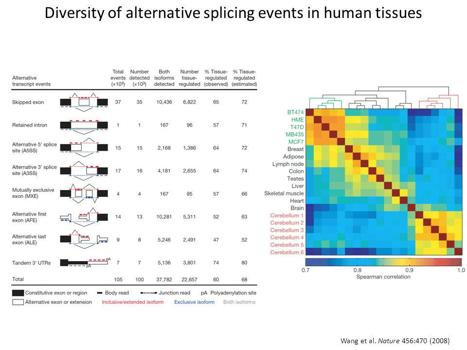 Diversity of alternative splicing events in human tissues