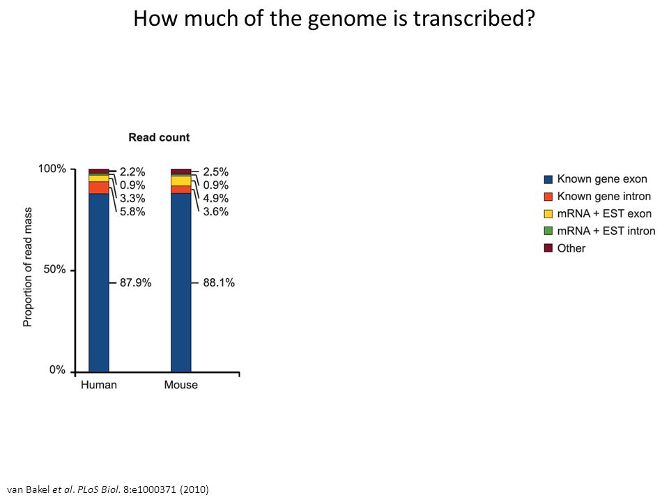 How much of the genome is transcribed