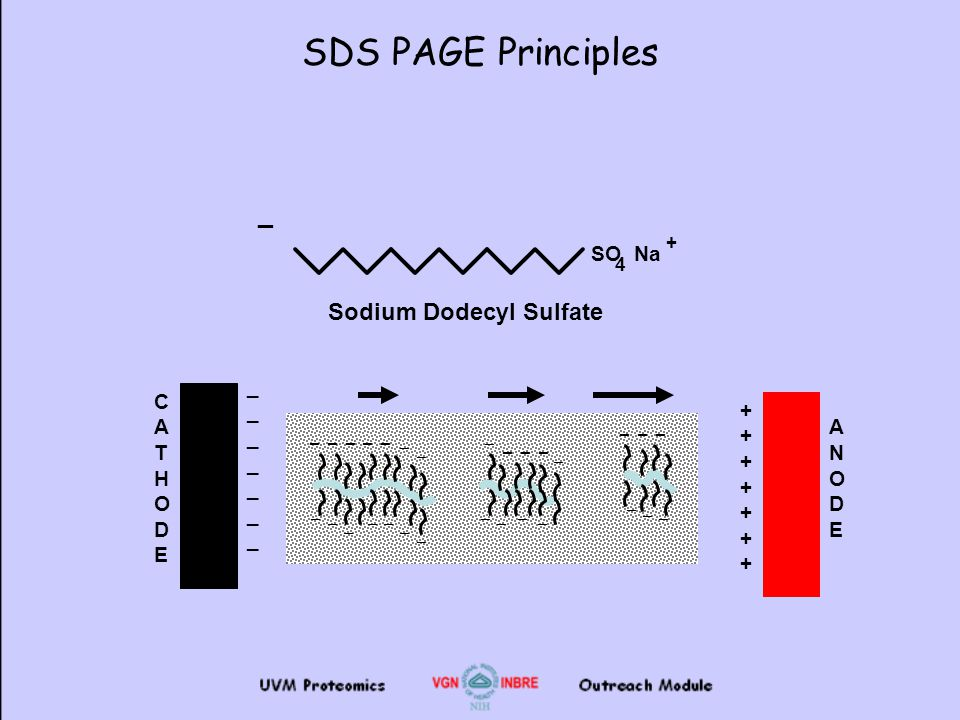 Electrophoresis and 2D Gel Analysis - ppt video online download