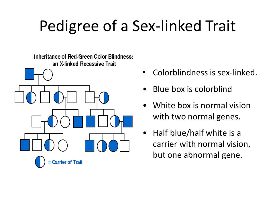 Characteristics of sex linked pedigrees