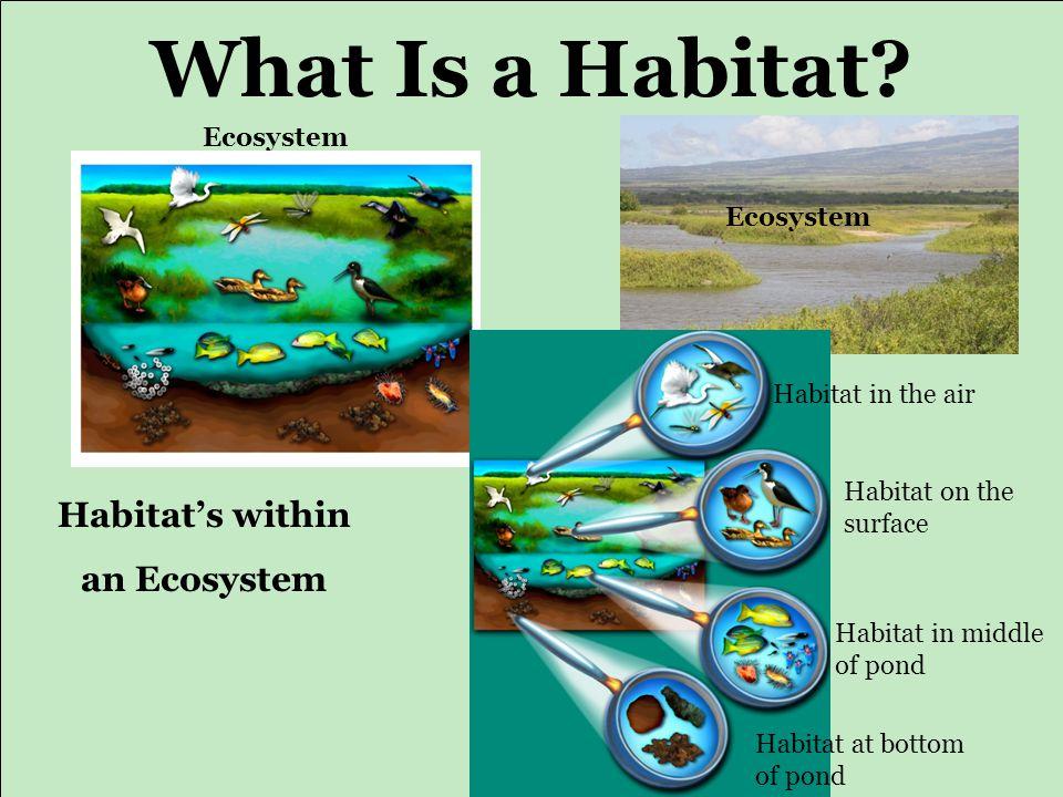 Animal Ecosystems Habitats