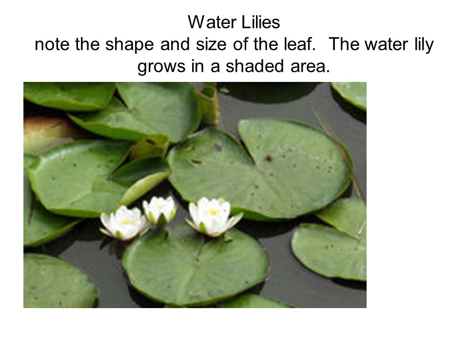 PLANT PARTS AND ADAPTATIONS - ppt video online download