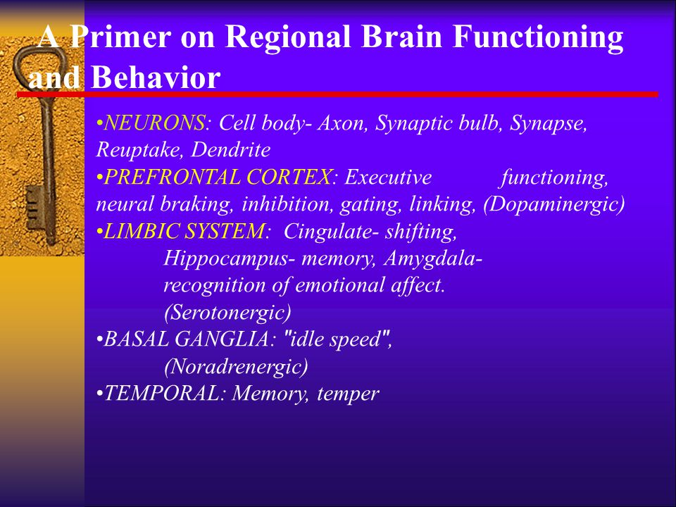 A Primer on Regional Brain Functioning and Behavior
