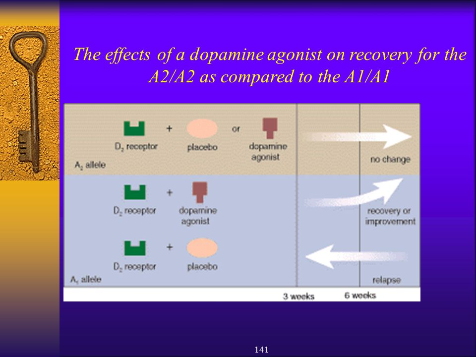 The effects of a dopamine agonist on recovery for the A2/A2 as compared to the A1/A1