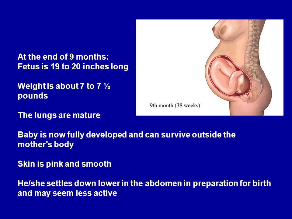 Human Growth and Reproduction - ppt download