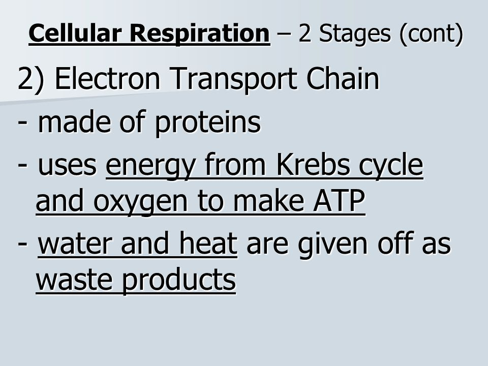 Cellular Respiration – 2 Stages (cont)