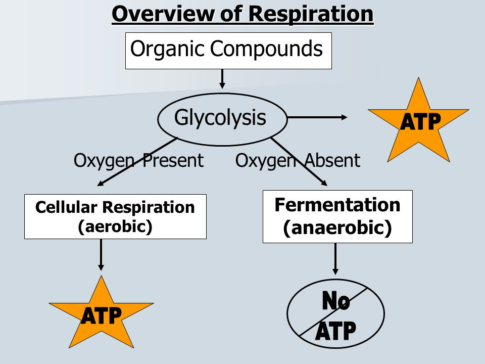 Overview of Respiration