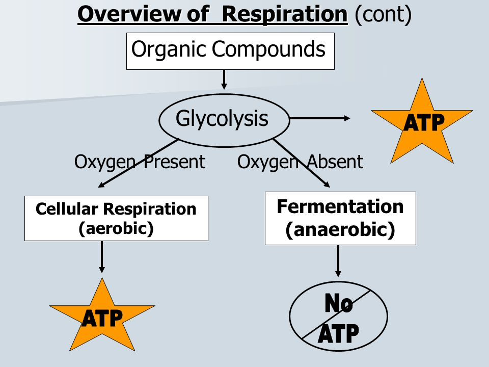 Overview of Respiration (cont)