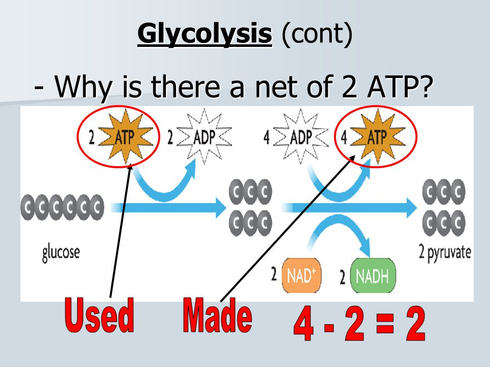 - Why is there a net of 2 ATP