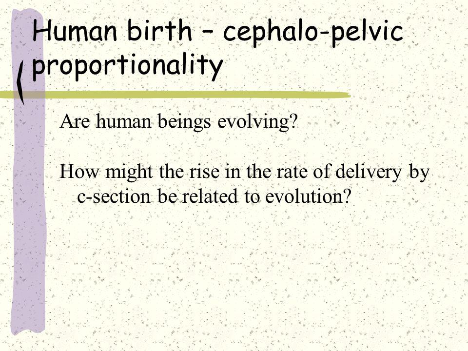 Psychology of Infancy Defining development, prenatal