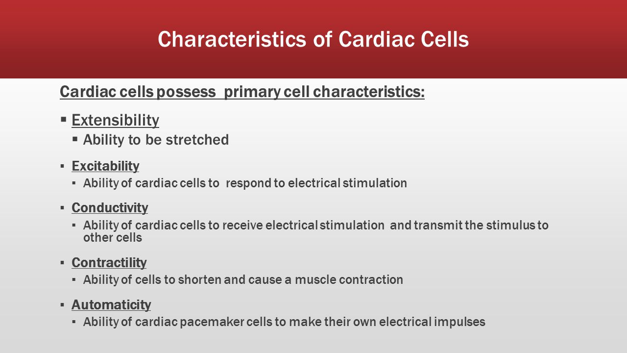 Cardiovascular Anatomy Physiology Ppt Download