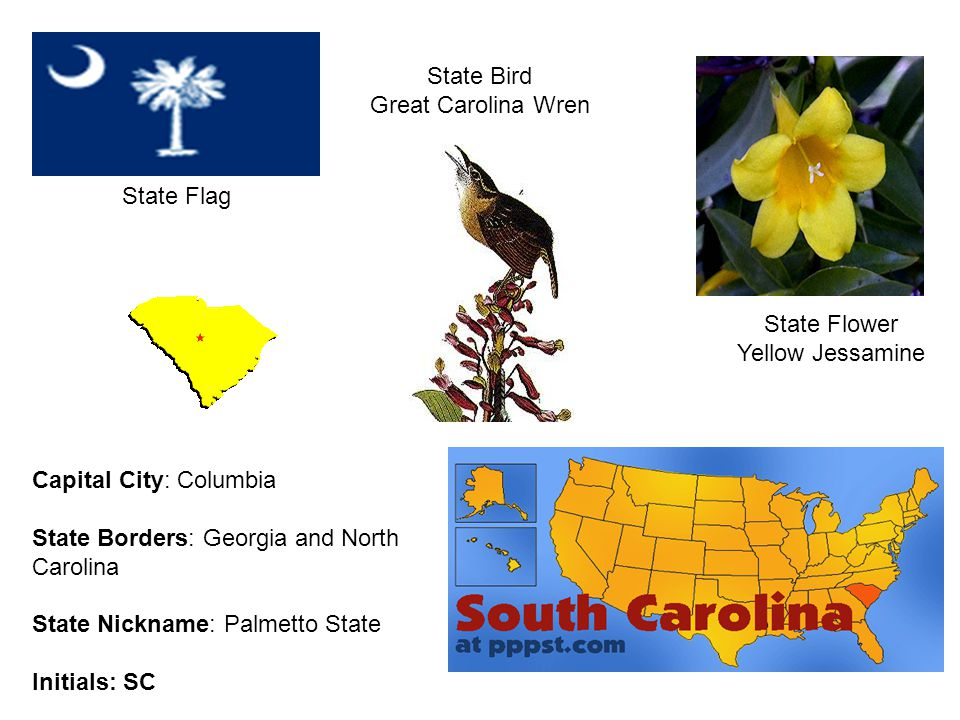 South Carolina State Flower And Bird Flowers Healthy