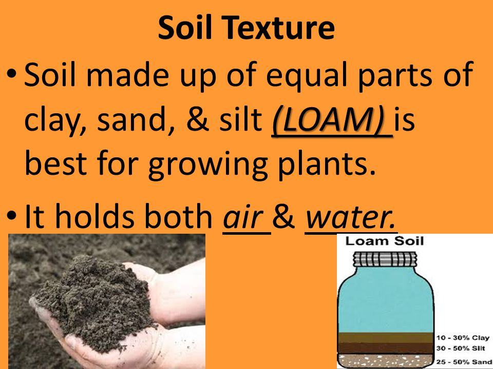 Soil Texture Soil made up of equal parts of clay, sand, & silt (LOAM) is best for growing plants.
