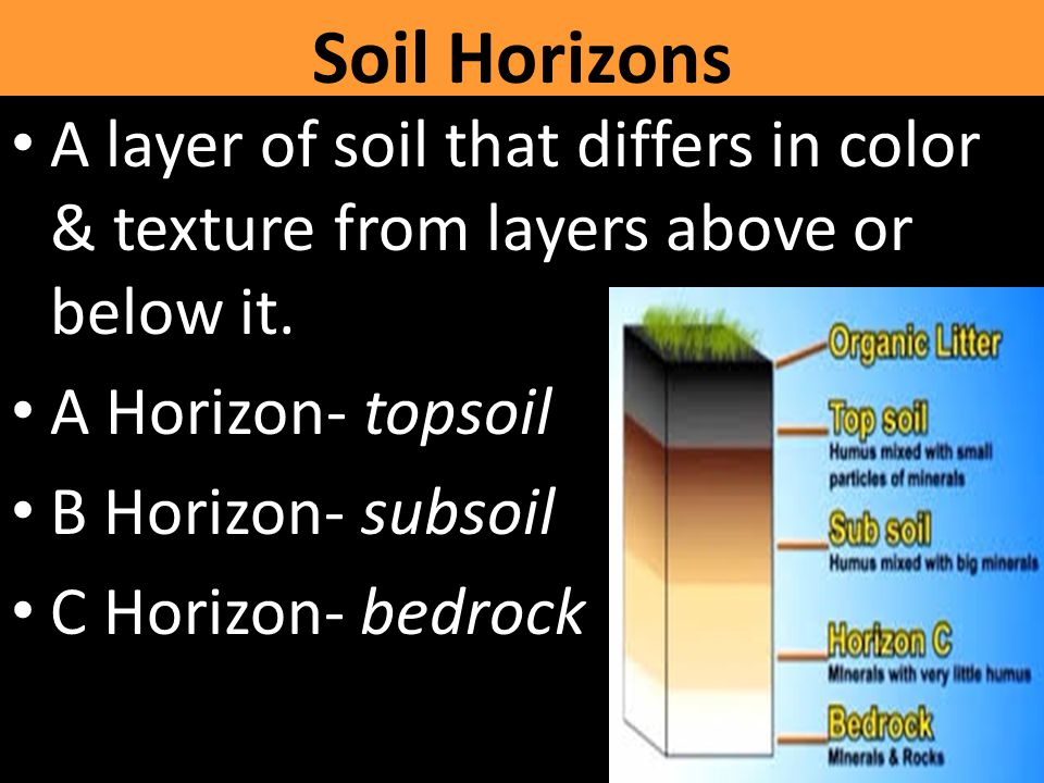 Soil Horizons A layer of soil that differs in color & texture from layers above or below it. A Horizon- topsoil.