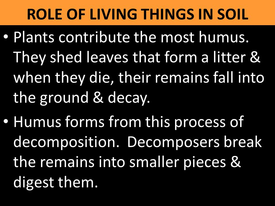 ROLE OF LIVING THINGS IN SOIL