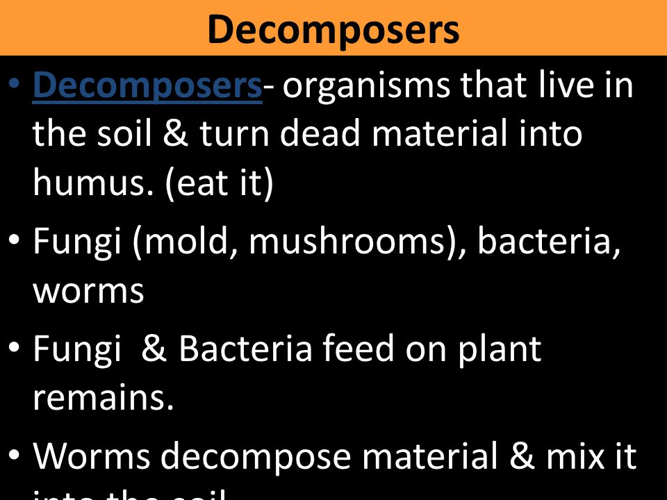 Decomposers Decomposers- organisms that live in the soil & turn dead material into humus. (eat it) Fungi (mold, mushrooms), bacteria, worms.