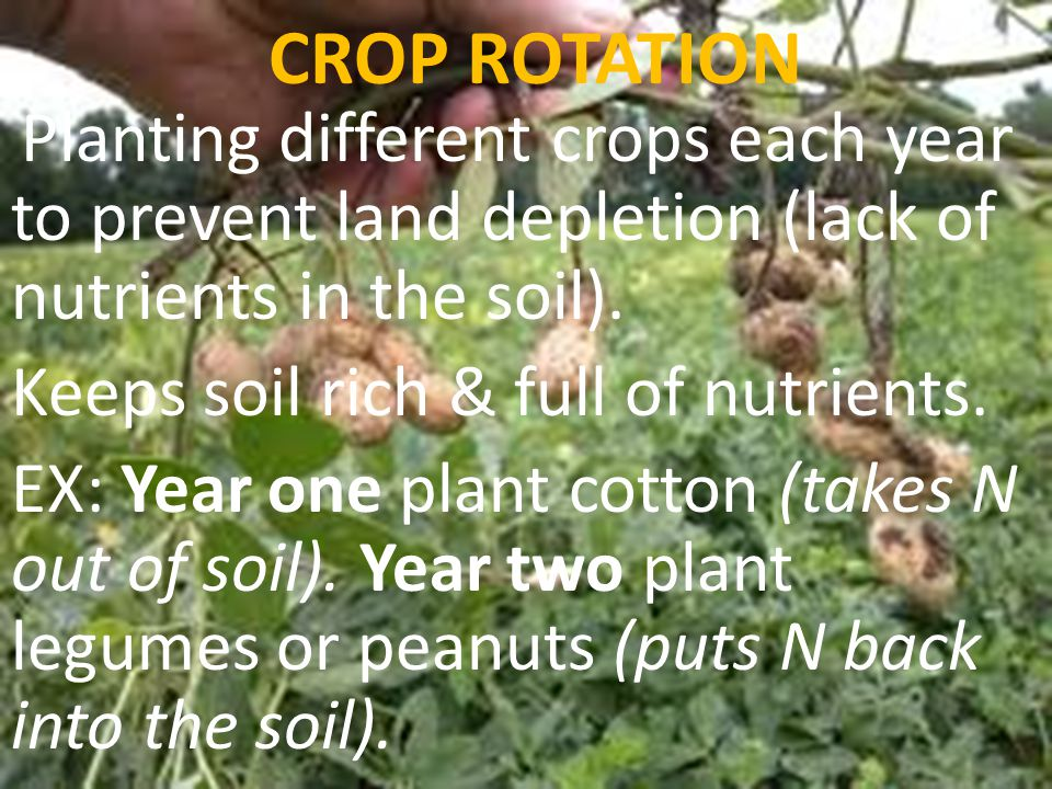 CROP ROTATION Keeps soil rich & full of nutrients.
