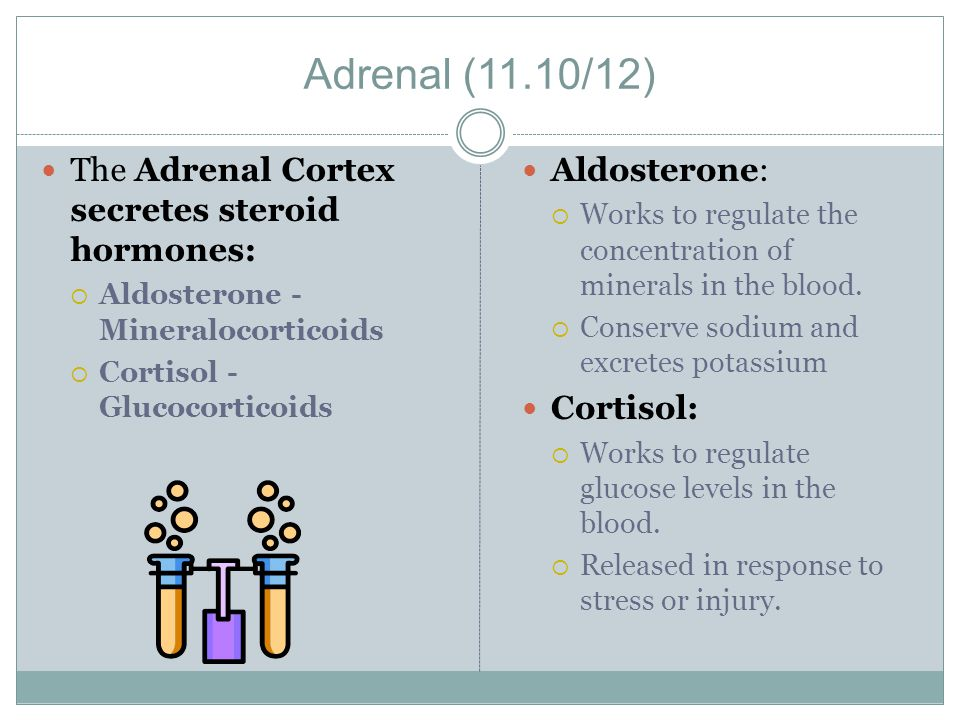 Adrenal (11.10/12) The Adrenal Cortex secretes steroid hormones: