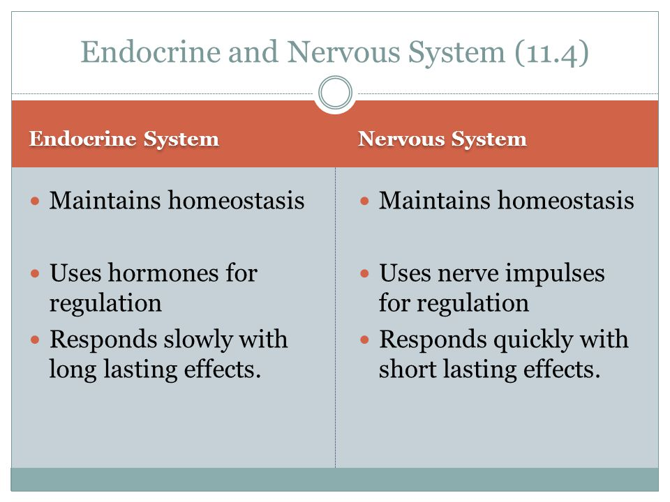 Endocrine and Nervous System (11.4)