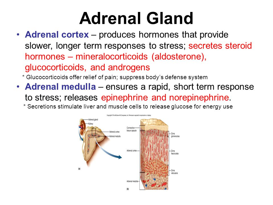 The adrenal cortex produces steroid hormones called how long does gynecomastia last steroids