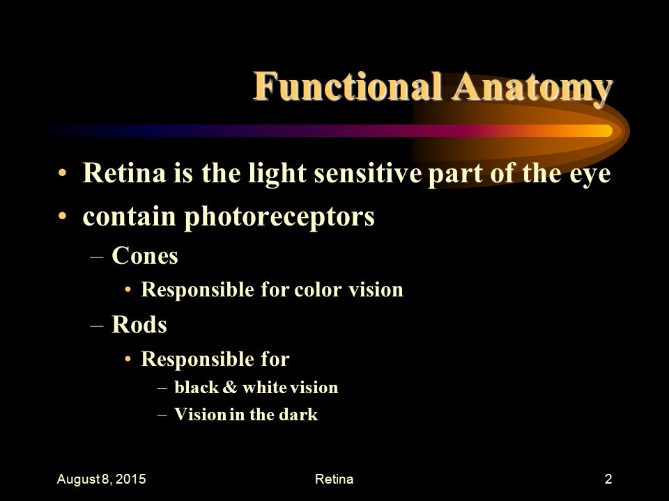 Physiology of the Retina - ppt video online download