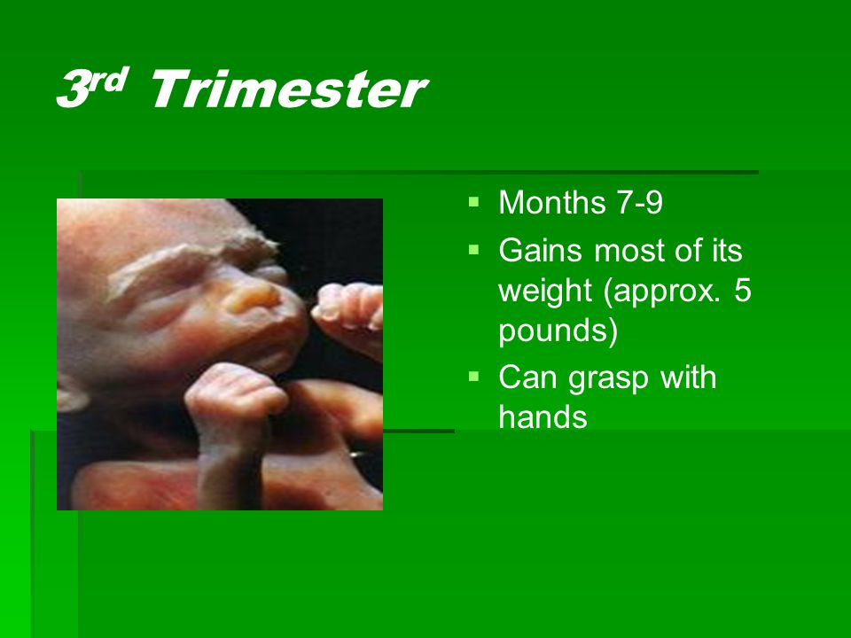 3rd Trimester Months 7-9 Gains most of its weight (approx. 5 pounds)