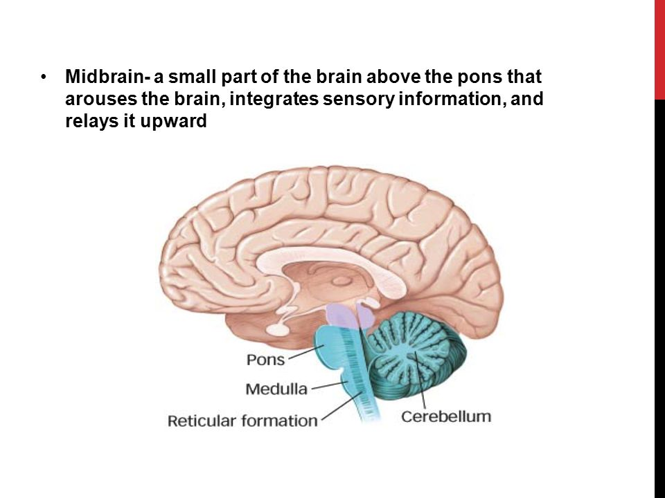 Studying The Brain Ppt Video Online Download