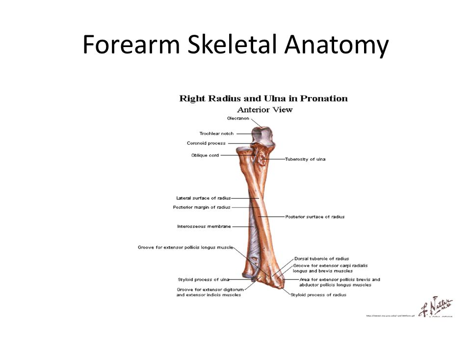 Elbow Forearm Hand And Wrist Ppt Video Online Download