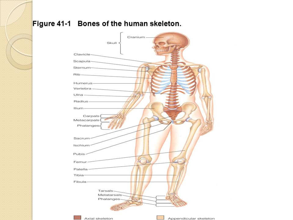 Musculoskeletal System Assessment & Disorders - ppt download