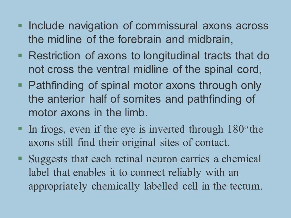Include navigation of commissural axons across the midline of the forebrain and midbrain,