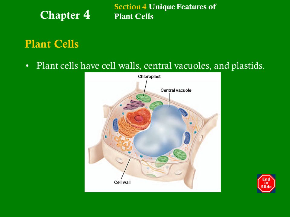 ce5039b0f669 Introduction to cell Biology - ppt download