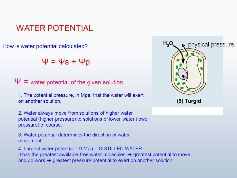 osmotic potential definition