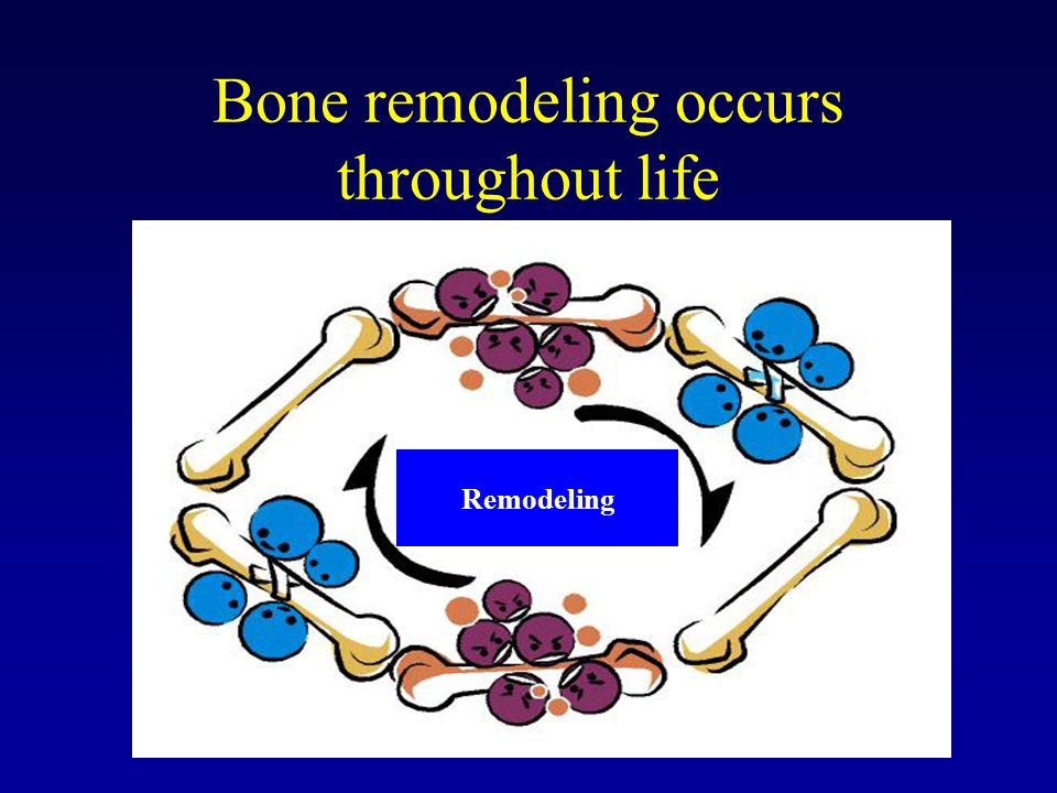 Bone remodeling occurs throughout life
